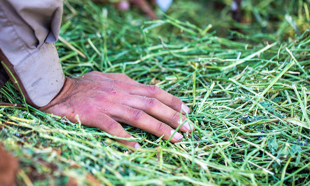 grass_hand